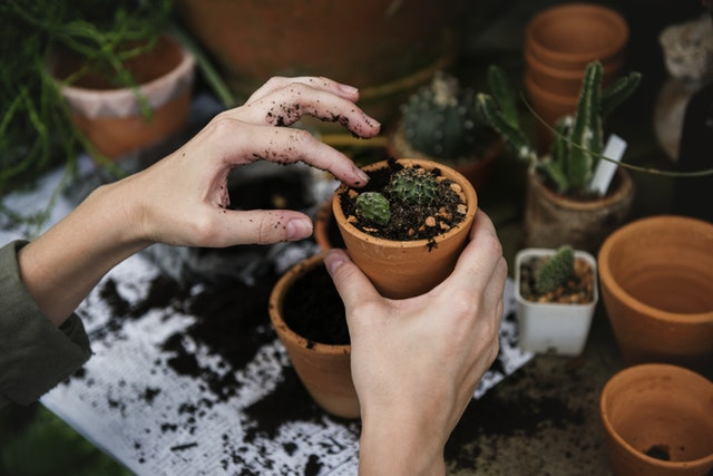 Gardening tips for newbies