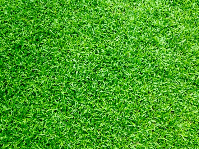 How to keep your grass in the best possible shape!