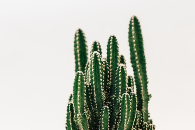 How To Plant A cactus In Your Garden
